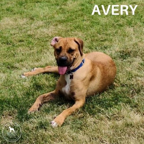 Avery 3