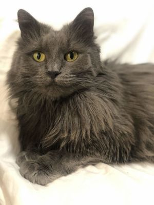 Angelic 4 year old 9lbs Celeste was originally surrendered to the shelter in 2017 in quite a stat