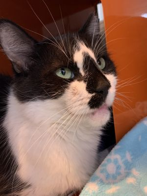 DOB 81714 Jade is a beautiful and sweet momma cat that was found outside as a stray with her two