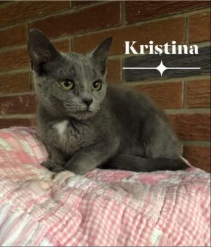 Kristina is as pretty as her name This lovely gray and white 3 month old was living behind a Burger