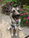 ?bust=1600449090&width=100 - Adopt a Dog