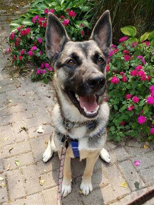 ?bust=1600449090&width=300 - Adopt a Dog