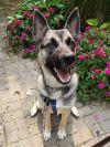 ?bust=1607012873&width=100 - Adopt a Dog