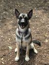 ?bust=1607012872&width=100 - Adopt a Dog