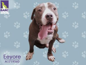 Youll know from just one look that Eeyore is nothing like his sad namesake He is big and goofy and