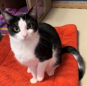 ?bust=1600458938&width=300 - Adopt a Cat