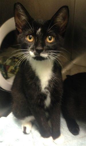 ?bust=1600460739&width=300 - Adopt a Cat