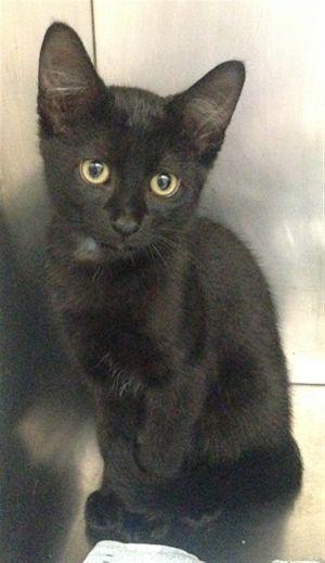 ?bust=1600460744&width=300 - Adopt a Cat