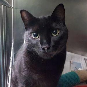 ?bust=1600462576&width=300 - Adopt a Cat