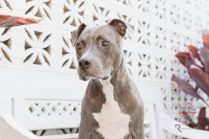 Meet Star Star is a 2-4 year old adorable little Pitty mix who is about 50lbs Star is super friend