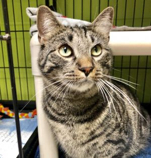 Due to Covid-19 the SPCA is allowing adoptions by appointment only If youd lik