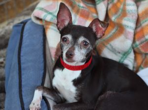 Stacy is a beautiful little lady and a youngster for the rescue at only 4 She was impounded with 6