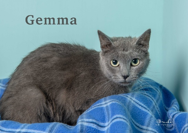 Gemma 2