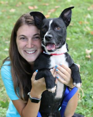 Mitch is an adorable Boston Terrier mix about 3 years old and 31 lbs He has a longish body shorti