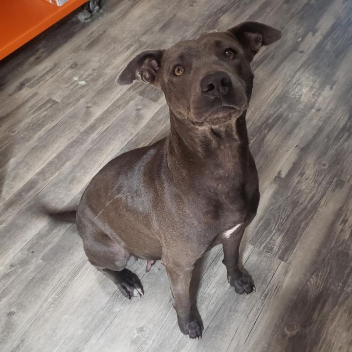 LYLAH, an adopted Mixed Breed in Cape Girardeau, MO
