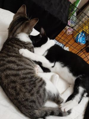 Sebastian and Scuttle are an adorable pair of young brothers born in May 2020 looking for a loving h