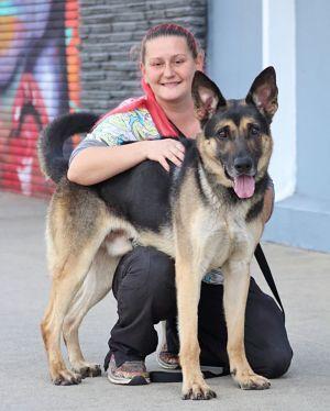 Wyatt von Elsnig is a beautiful 4 year old German Shepherd He has a sweet initially shy personalit