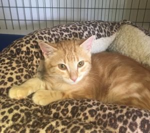 My name is Flynn As a brand new kitten I was scooped up from a construction sit
