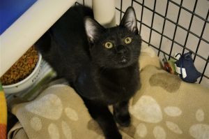 For more information on Lagertha call AWS at 860-354-1350 email animalwelfaresoctysnetnet or vis