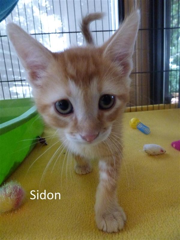Sidon 2
