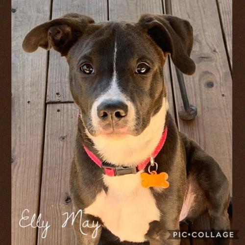Elly May