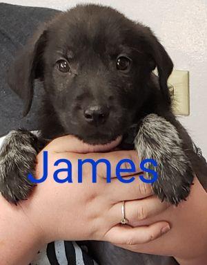 James Terrier Dog