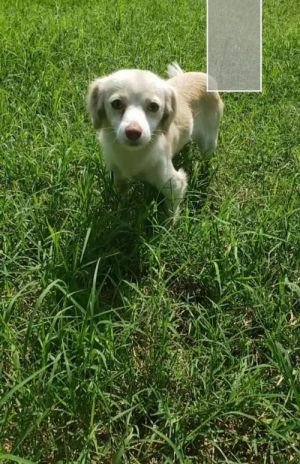 You can fill out an adoption application online on our official websiteKristopher TX is a male Ch