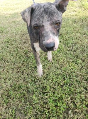 You can fill out an adoption application online on our official websiteMaggie May TX is a female