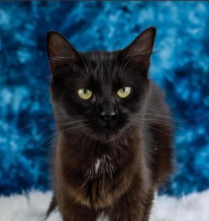 Say hello to Tessa This beautiful one year old girl is at the shelter and cant wait to meet you