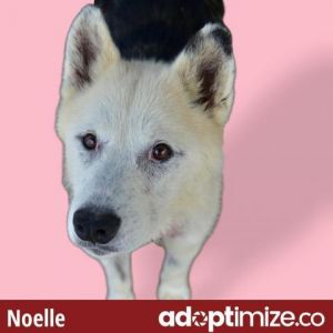 Hi Im Noelle I am a sweet senior girl who is getting over some recent medical issues but I am