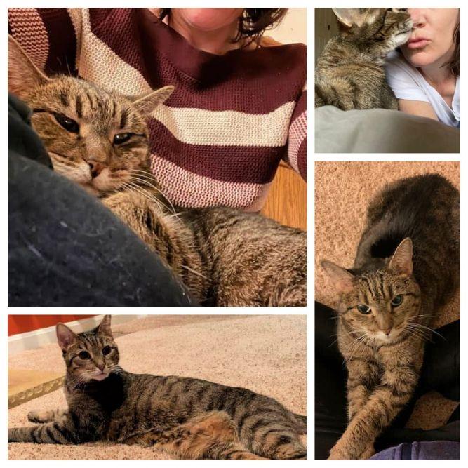 Meer - Senior kitty - only cat*