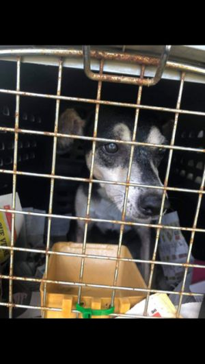 Oh my goodness lets get this girl out of that cage Bader looks like a Beagle mixed w MinPin or