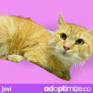 Jovi has diabetes is on insulin and doing very well Any potential adopter must speak with our vete