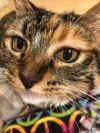 Lindy Sue, gentlest catnip addict ever.  Special Needs