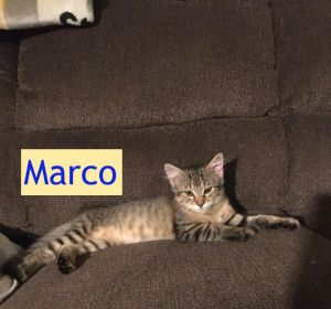 Marco (Tammy's foster)