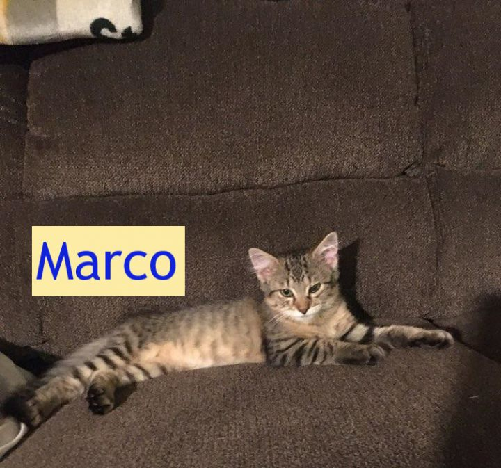 Marco (Tammy's foster) 1