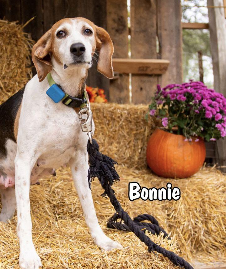 Bonnie 3