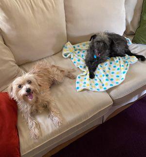 Gabby & Leslie Terrier Dog