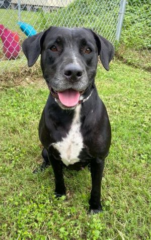 Izzy 42223 is looking for a place to call home She is looking for a home that has a secure