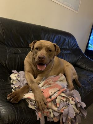 From baldwinparkanimalslaco thriving in foster but still looking for a forever home Is Ethel A5366