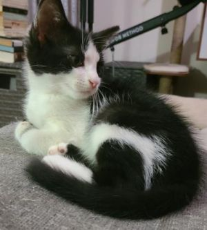 Ivy is the perfect kitten She is a beautiful little girl who loves playing with