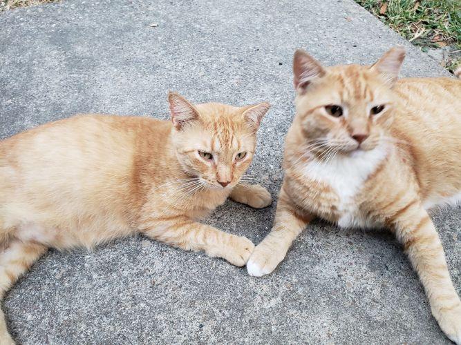 Ginger and Margaret
