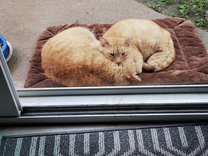Ginger and Margaret 2