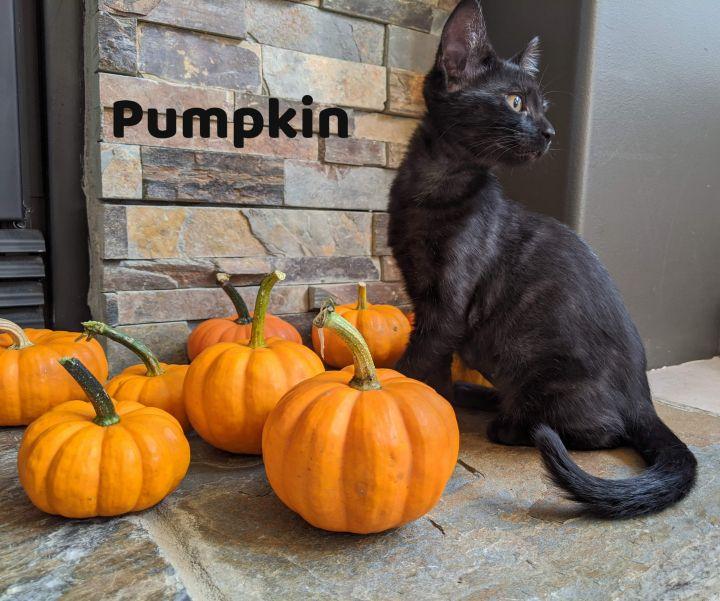 Pumpkin Williams 1