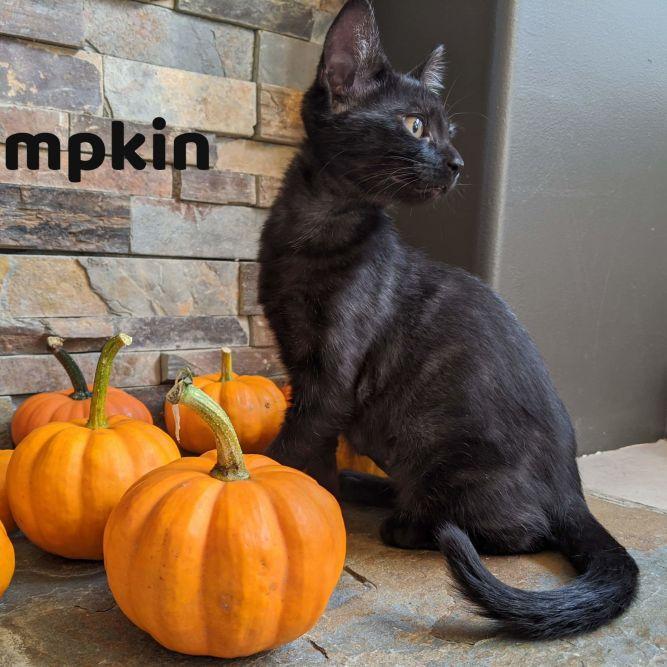 Pumpkin Williams