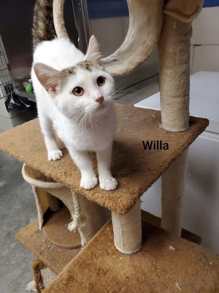 Willa 1