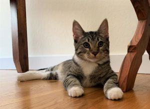 Bonnie and Clyde are two adorable playful loving and purr-ific teen kittens