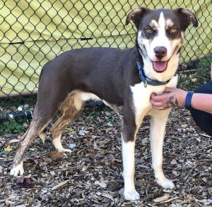 Not only is Miguel gorgeous but he has the charming personality to match Hes a great pup-loves peo