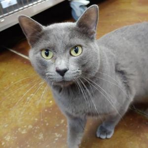 Hello my name is Dorian Im a very sweet and loving boy Ive been at the shelter since September