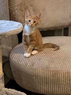 Daisy (kitten) 1